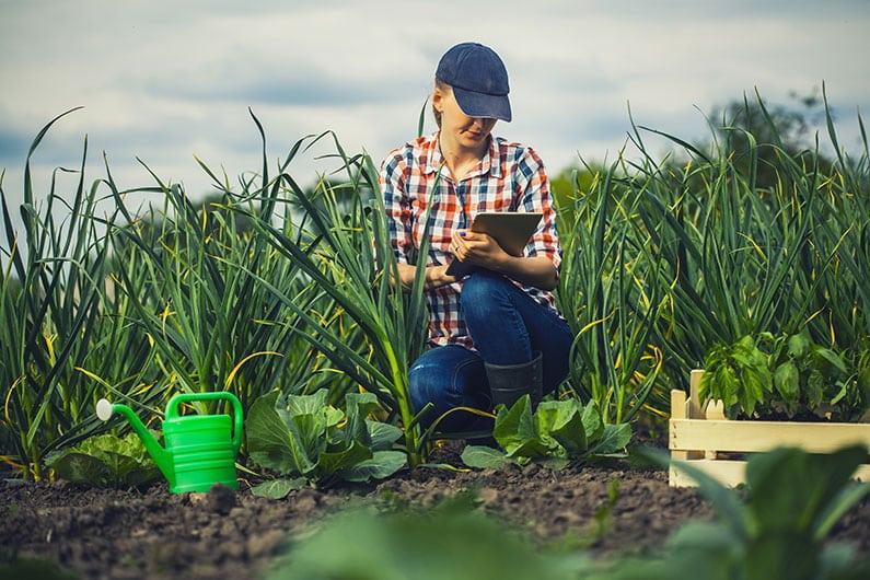RFID in der Landwirtschaft – wie die moderne Technik den Bauern hilft